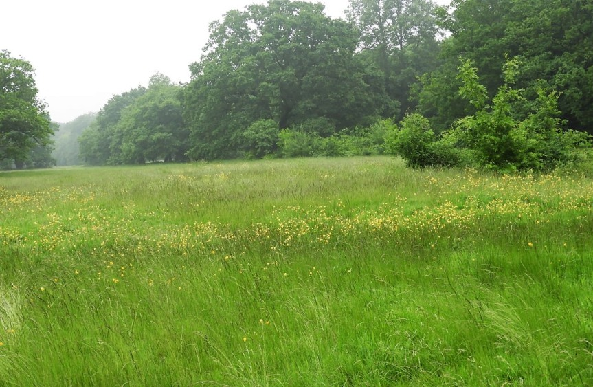 Meadow Epping Forest